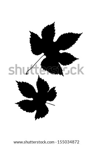 Black silhouettes of two leaves of wild grape against white background  - stock photo