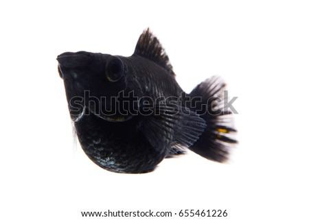 black small fish in white background