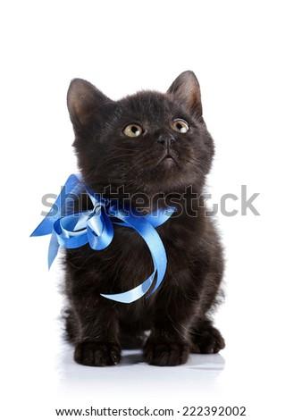 Black small kitten with a blue tape.  Fluffy black kitten. Kitten on a white background. Small predator. Black kitty. Small cat. - stock photo