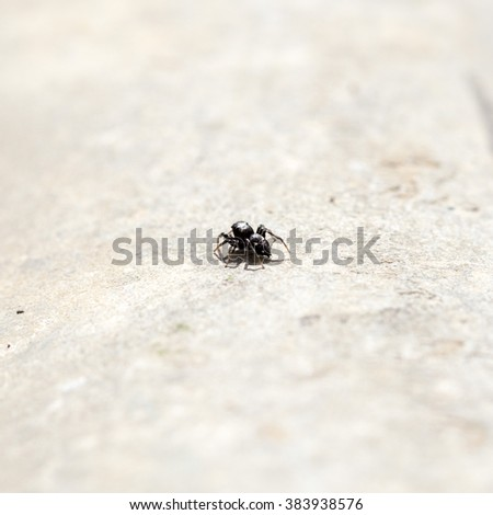 Black small spider on concrete background