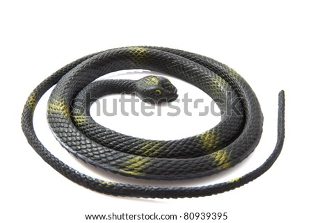 Black snake rolled up isolated over white - stock photo