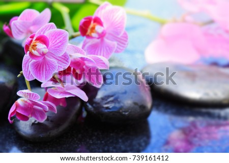 Black spa stones and pink orchid.