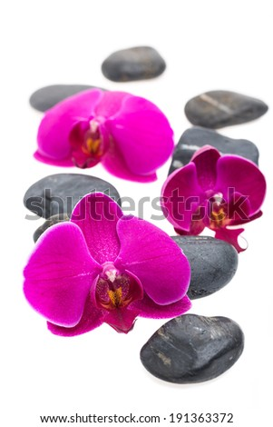 Black stones and flowers isolated on white background
