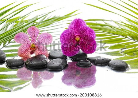 Black stones and pink and red orchid and palm leaf background - stock photo