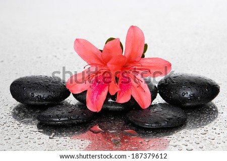 black stones and red lily flower