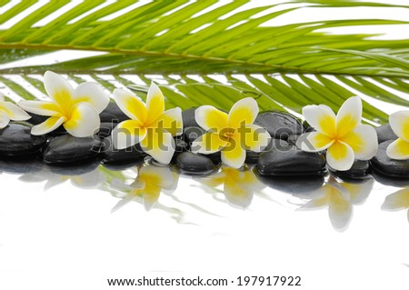 Black stones and row of frangipani and palm leaf background - stock photo
