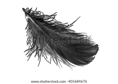 black swan feather on white background isolated, flying feather - stock photo