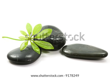 Black therapy stones with leaves and waterdrops