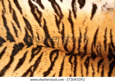 black tiger stripes on real pelt, colorful animal texture - stock photo