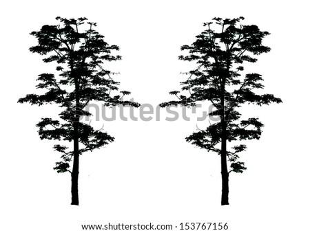 Black tree. isolated on white - stock photo
