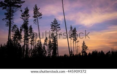 black tree silhouettes on colorful sunset sky - stock photo