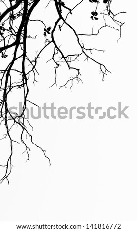 black tree with white background