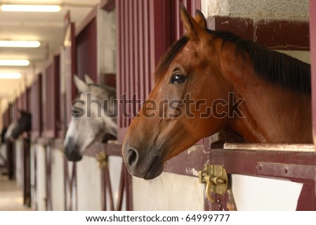 black white and brown Horses in their stable - stock photo
