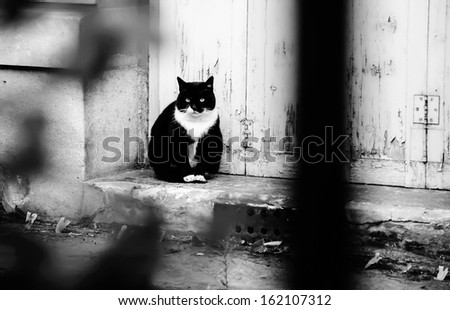 Black white cat sitting on doorstep of old house with wooden grungy door. View through  the blurred fence and garden plants. Abandoned pet concept. Black and white abstract photo.