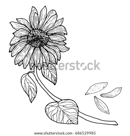 Black White Sunflower On A Branch With Leaves Flower Bud Isolated Raster Illustration