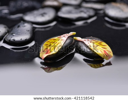 Black zen stone and orchid petal still life - stock photo