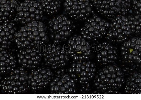 Blackberries close-up, background - stock photo