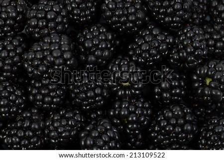 Blackberries close-up, background - stock photo