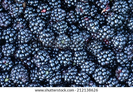 Blackberries from a local forest.