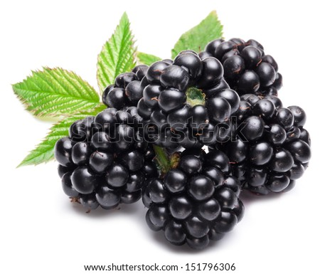 Blackberries isolated on white background. - stock photo