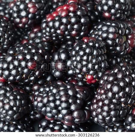 blackberry background - stock photo