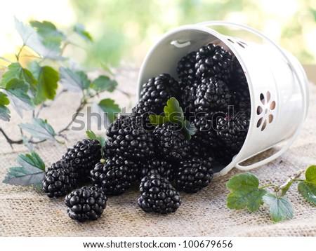 Blackberry in white bucket. Selective focus - stock photo
