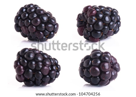 blackberry isolated on a white background - stock photo