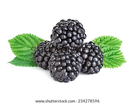 Blackberry with leaves isolated on white background - stock photo