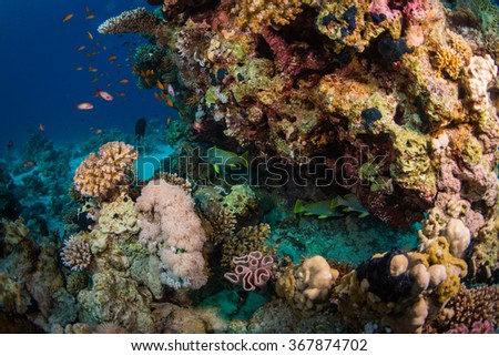 Blackspotted rubberlip on coral reaf of Sharm El Sheih - stock photo