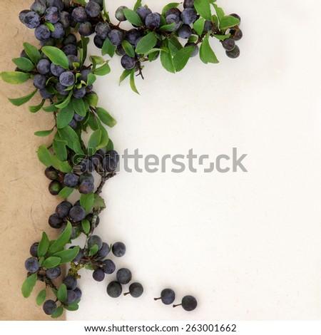 Blackthorn border with sloe berries on hemp paper background. Prunus spinosa. - stock photo