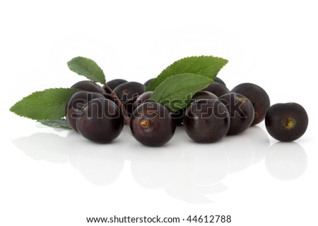 Blackthorn fruit with leaf sprigs, isolated over white background with reflection. Also known as sloe berry. - stock photo
