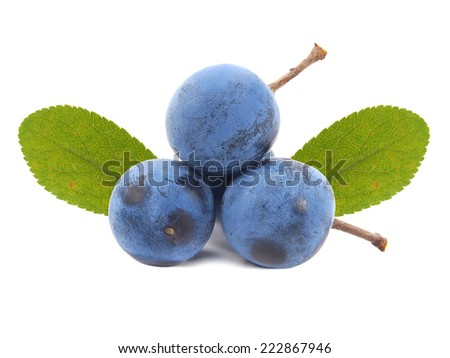 Blackthorn or Sloe berries isolated on white background. Prunus spinosa - stock photo