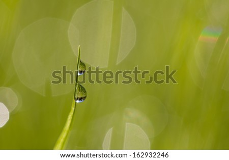 Blade of grass with raindrops