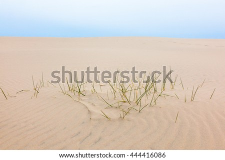 Blades of grass in the sand - stock photo