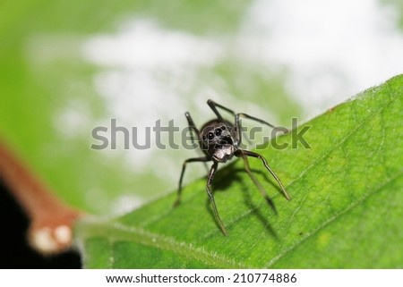 blank ant spider in green nature or in the forest