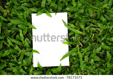 blank paper  on green grass field - stock photo