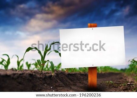 Blank sign in corn agricultural field in early spring, selective focus. - stock photo