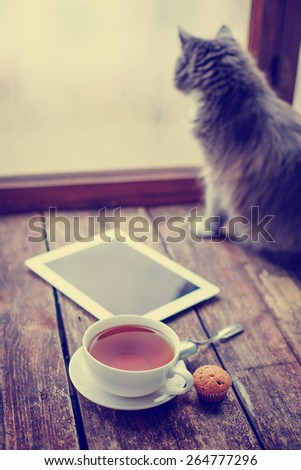 blank tablet device over a wooden workspace table with cup of tea and cat/ selective focus  - stock photo