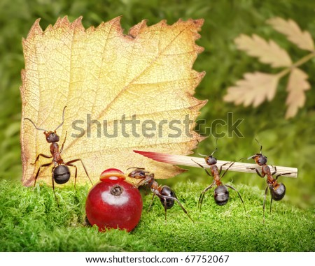 blank, team of ants writing on a postcard, place your text - stock photo