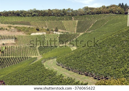Blankenhornsberg; vineyards; terraces; Kaiserstuhl;