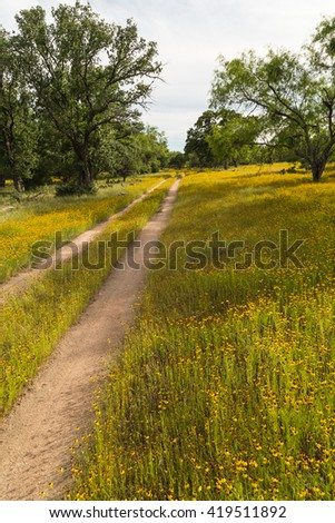 Blanket of yellow wildflowers along dirt road through cattle ranch in Central Texas. Vertical format. - stock photo
