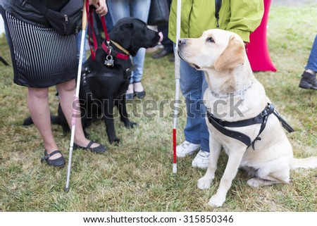 Blind people and guide dogs during the last training for the animals. The dogs are undergoing various trainings before finally given to the physically disabled people.  - stock photo