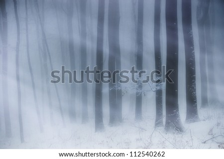 blizzard in forest - stock photo