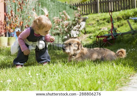 blonde baby two years old age approaching crouching to a brown terrier breed dog lying on green grass lawn and looking at girl - stock photo