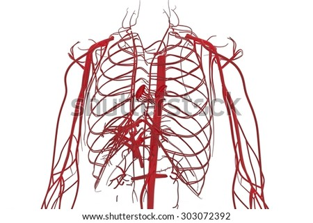 blood system circulatory system cardiovascular system stock, Sphenoid