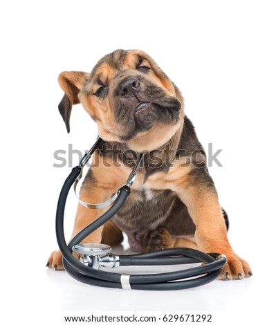 Bloodhound puppy with stethoscope on his neck shaking off water. isolated on white background