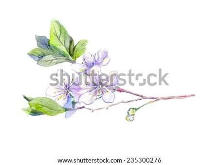 Bloom cherry fruit tree flower (sakura) - blossom. Spring watercolor