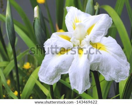 Bloomed White Flower - stock photo