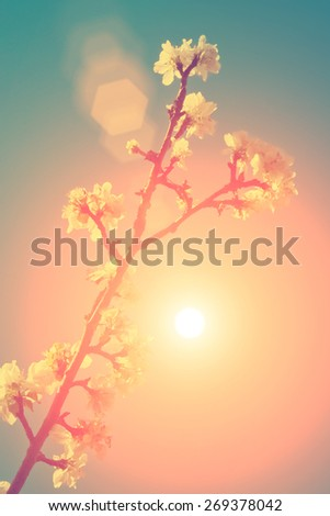 Blooming apple-tree branch in the blue sky - instagram style - stock photo