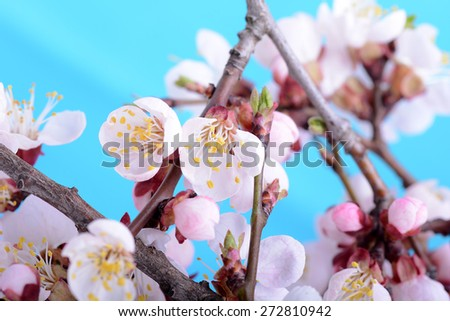 Blooming apple tree in spring time, close up - stock photo